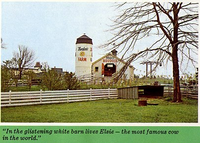 In the         glistening white barn lives Elsie - the most famous cow in the         world